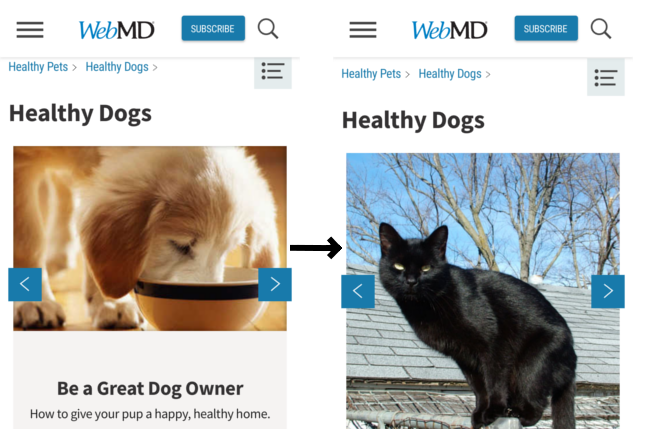 WebMD before and after images are replaced with a cat.